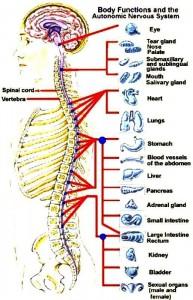 Jawbone Puls